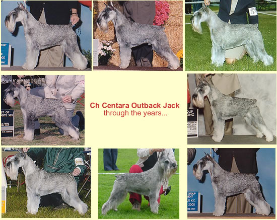 Ch Centara Outback Jack through the years...