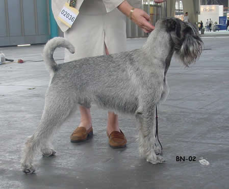 Loke, World Winner Show 2002