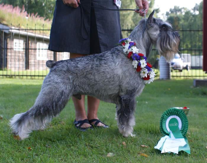 kolja-prizes-flower1