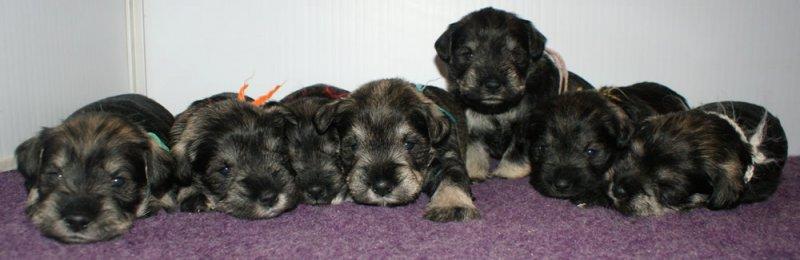 all-pups-3w