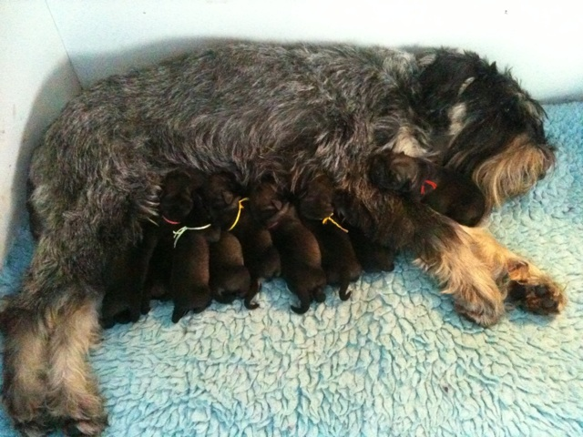 Newborn M3 puppies