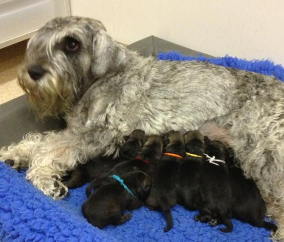 Cara puppies newborn