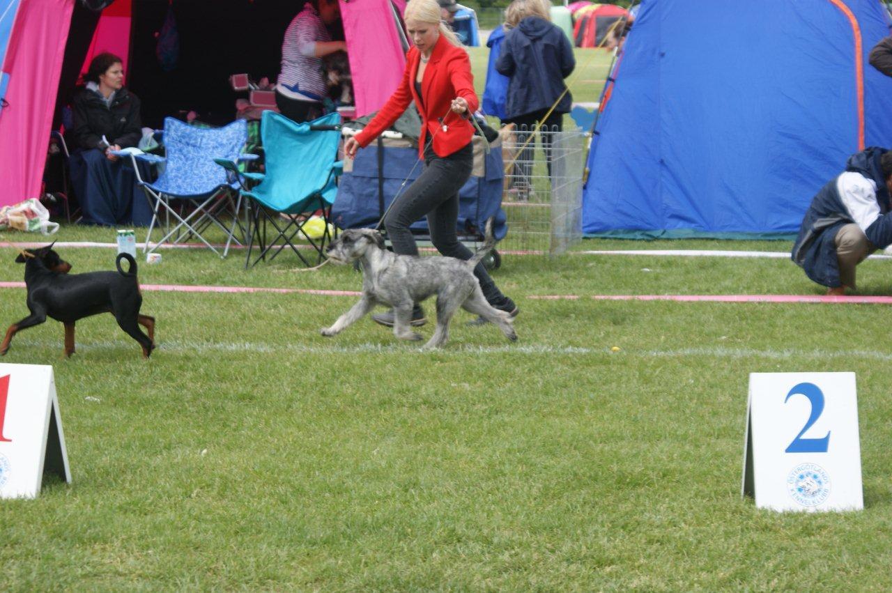 kelly_running_puppy