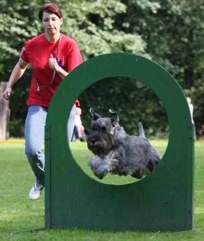 Turnierhundsportimage065