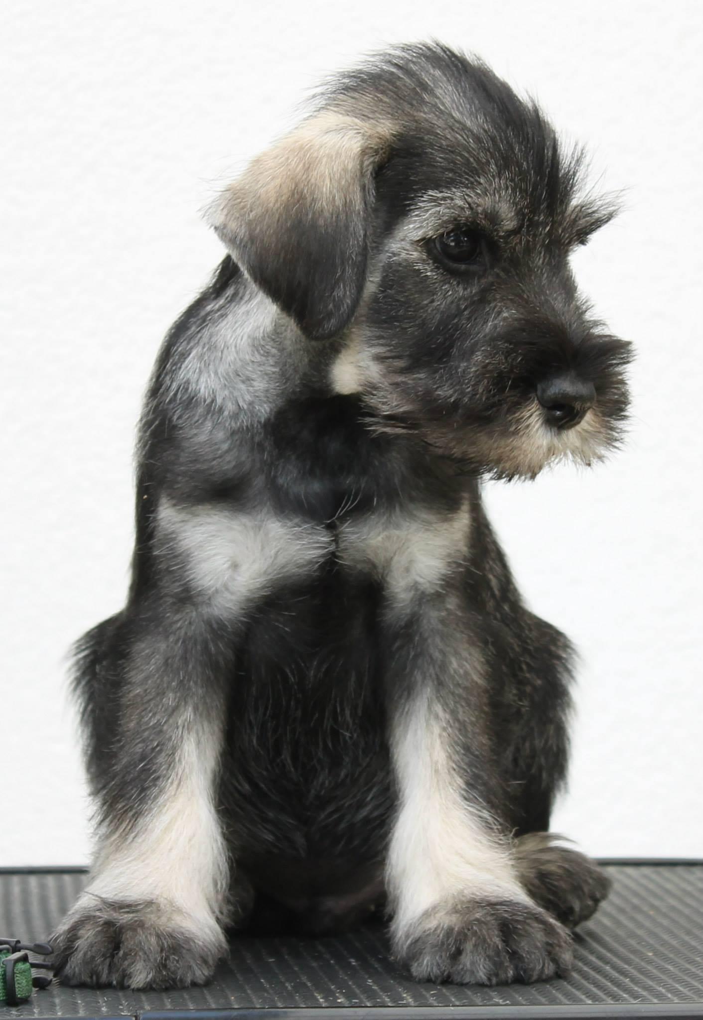 PrinsPaladin_puppy